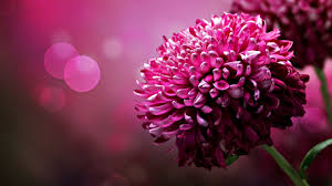 best flowers wallpapers hd group 78