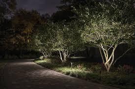 lighting small trees landscape
