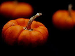 displaying 11 images for cute pumpkin