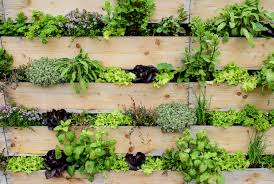 Diy How To Make Your Own Living Wall