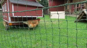 Free Chicken Coops Plans Eglu Chicken Coop Nz