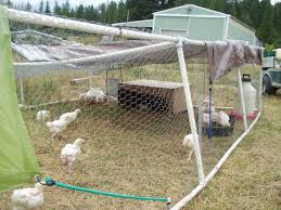 Raising Chickens 2 0 No More Coop And Run