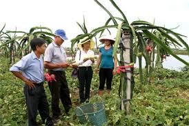 Acelera NinhBinh esfuerzos en construcción de nueva ruralidad ...