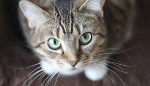 10 fun facts about cat eyes you