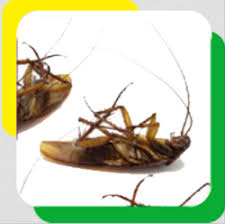 Cockroaches Pest Control Services in Jaipur, कॉकरोच पेस्ट कंट्रोल सर्विस,  जयपुर