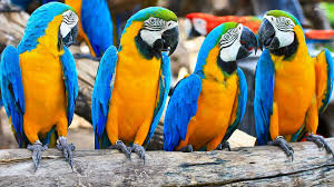macaw wallpaper 1920x1080 46472