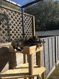 Do Cat Fences Work Protectapet