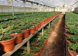 tyler texas plant nurseries garden
