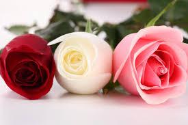 صور عن الازهار باقات رائعه من الزهور الطبيعيه صور حزينه