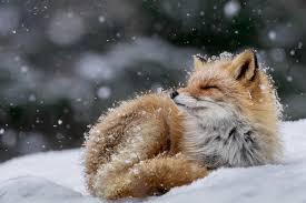 47 Mesmerizing Photos of Animals in the Wild