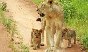 Wildlife conservation leading to improved healthcare and education   SOS - Save Our Species I IUCN Global Species Programme