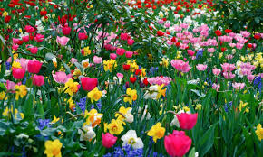 Free Spring Flowers Wallpaper Images at Landscape » Monodomo