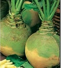 seeds rutabaga wilhelmsburg organically