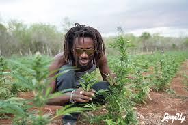 The Birdheye View: Growing All People's Medicine at Jamaica's ...