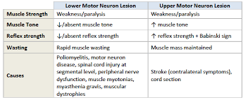 upper vs lower motor neuron signs