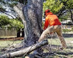 Tree Removal Company in Sun Lakes AZ | Get a Free Price Quote Fast!