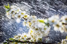 Image result for spring rain photos