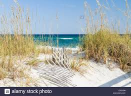 Dune Fence And Sea Oats On The Dunes At Pensacola Beach Florida On Stock Photo Alamy