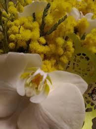 Festa della Donna | Consegna fiori e mimosa a domicilio a Caserta