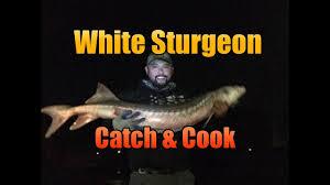 Californian White Sturgeon - Catch and ...