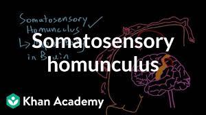 somatosensory homunculus video khan