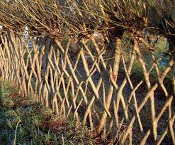 Living With Twisted Willow Don T Take A Fence Willow Fence Living Willow Fence Living Willow