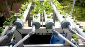 hydroponics growing system homemade