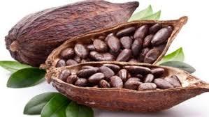 doğal bitkisel kakao yağı