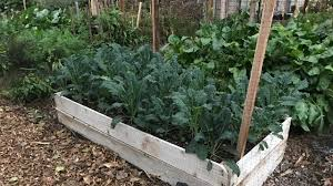 grow a raised bed vegetable garden