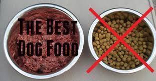 can pitbulls eat raw meat t best