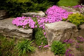 the best plants for rock gardens