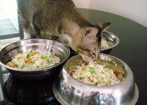 homemade cat food recipes for sensitive