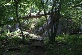 Shenandoah National Park Bearfence Mountain Trail Takemytrip Com