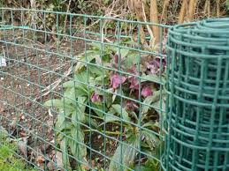 Pin On Fruit And Veg For The Allotment