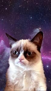 grumpy cat in e empapelado de