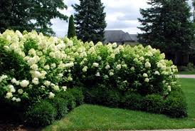 Spring Court Cut Bushes Shrubs And Hedges In Spring Interior Design Ideas Ofdesign