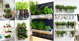 indoor herb garden for small kitchens