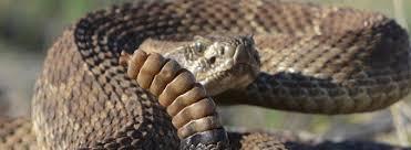 Rattlesnake Refresher News For Page Lake Powell Arizona