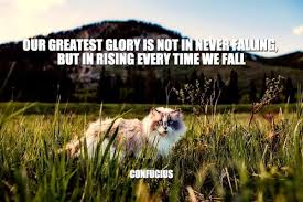 daily quotes our greatest glory is not in never falling but in
