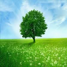 الطبيعة الخضراء خلفية حية For Android Apk Download