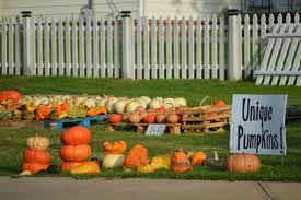 Two Pumpkin Patches Uprooted By The City North Royalton Thepostnewspapers Com