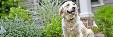 Dogwatch Of Central Indiana Hidden Dog Fences It S All About Your Dog