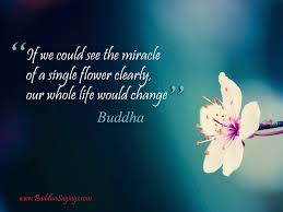 if we could see the miracle of a single flower clearly flower