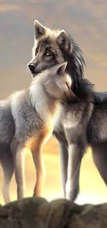 top 95 wolf wallpapers free