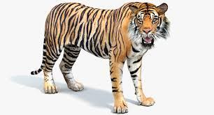 Sumatran tiger rigged cat 3D model ...