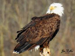 Wound Just a Bit Too Tightly | Eastwood Eagle Watchers