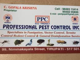 44+ Termite Control Companies Near Me  PNG