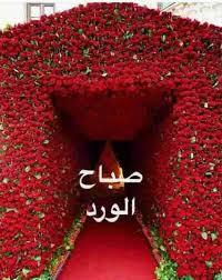 وردة صباح الخير الحب هو اجمل صباح راح اقلك ازاي اثارة مثيرة