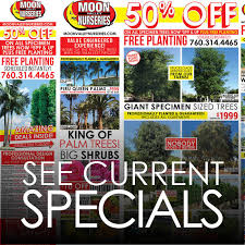 palm paradise san go palm tree nursery
