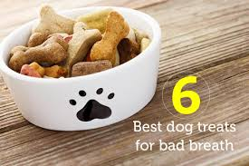 6 best dog treats for bad breath